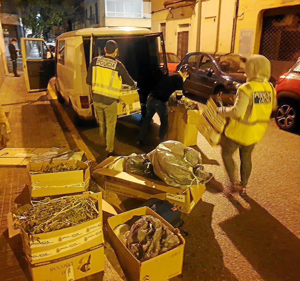 Policía Nacional y Policía Local de Palma luchan de forma conjunta contra la proliferación de plantaciones de marihuana