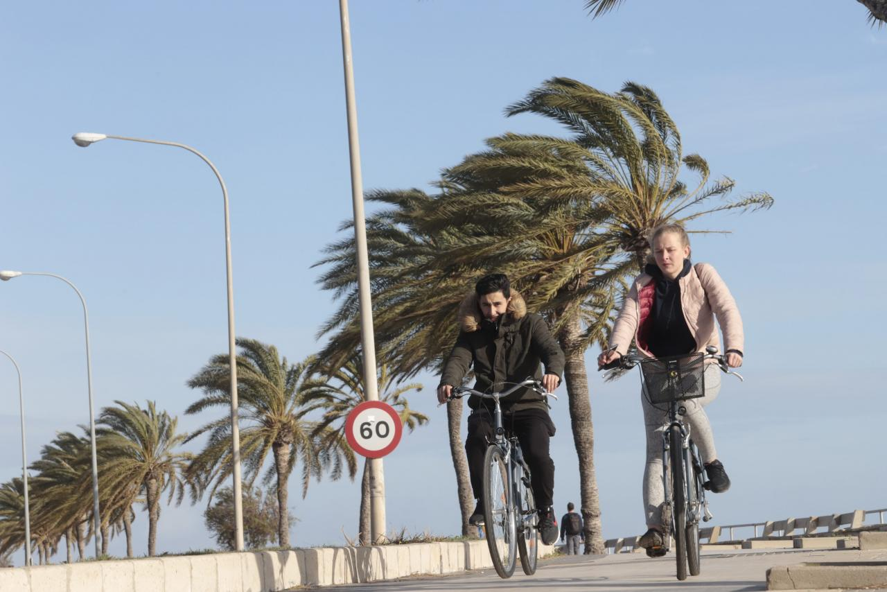 Temporal de viento en Palma