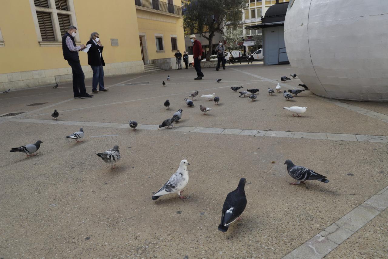 palma presentacion instalacion pienso esterelizado para palomas foto