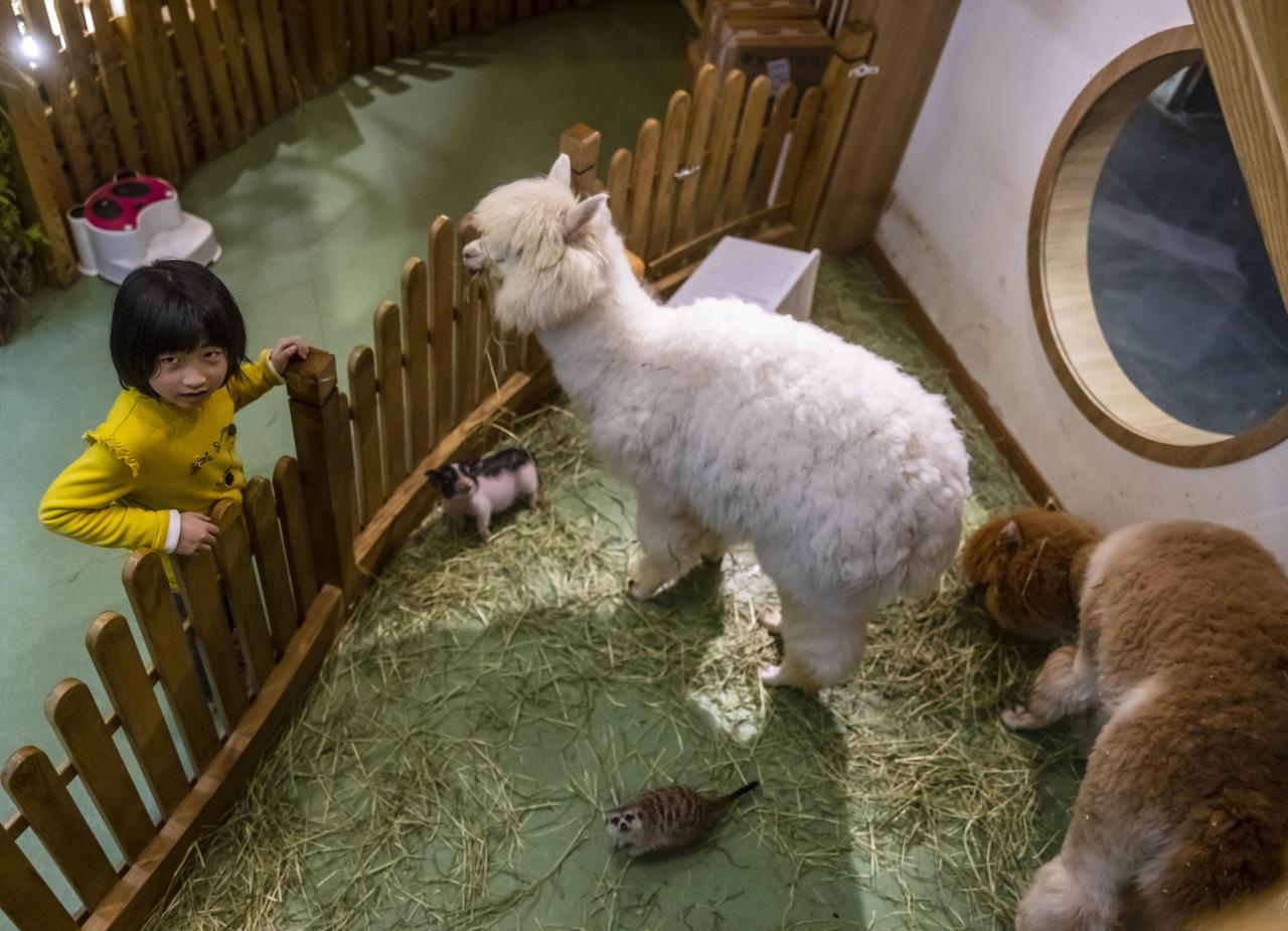 China's booming animal cafes