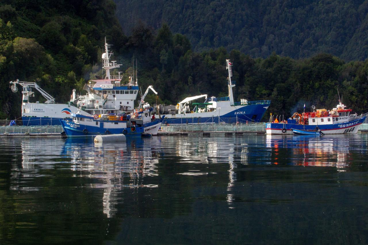 'Environmental catastrophe' in Chile after death of almost 5,600 tons of salmon