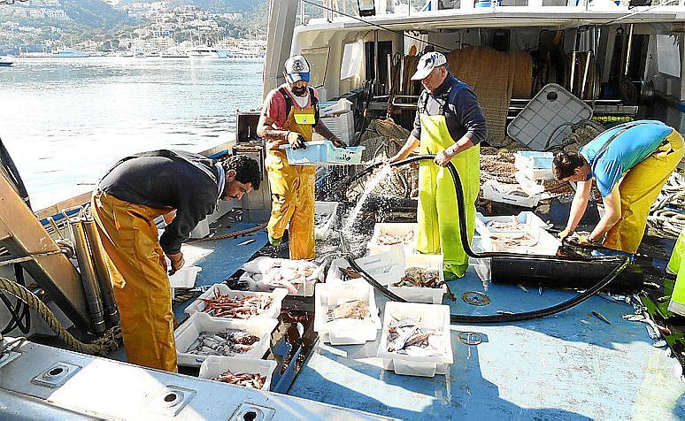 Arranca la temporada de pesca de langosta pendiente de la evolución de la pandemia.