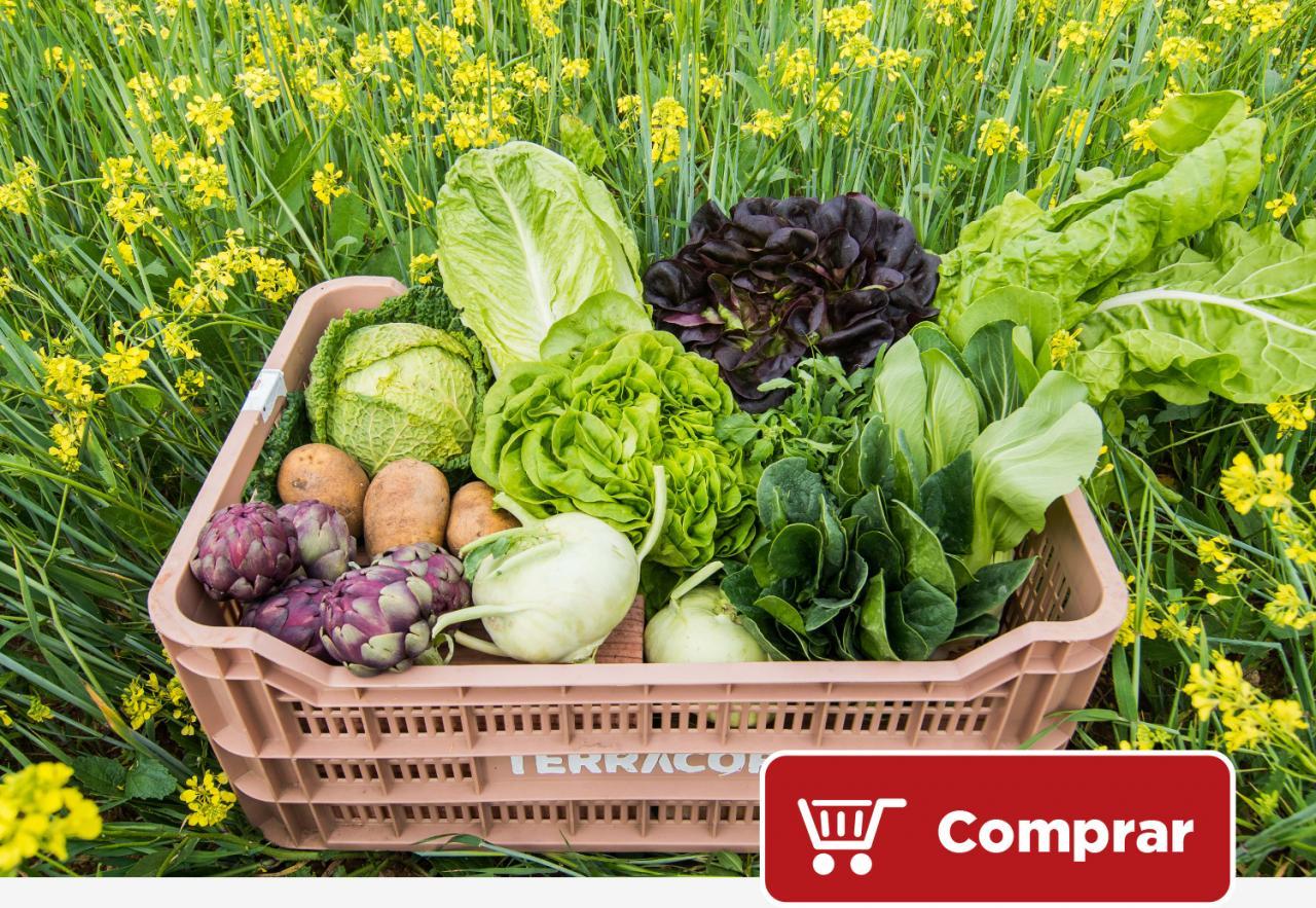 Terragust - Caja de verduras variadas