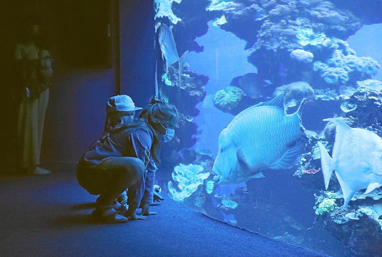 Palma Aquarium reabre sus puertas tras más de ocho meses cerrado por la pandemia