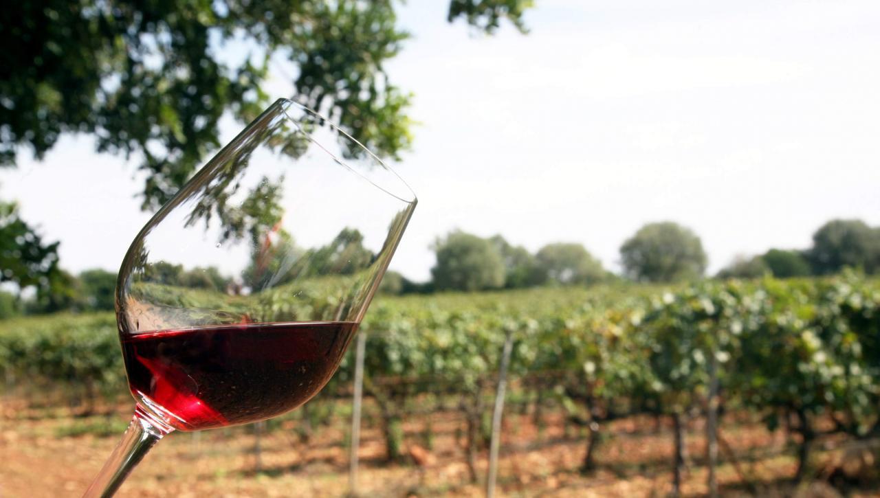 vino terra de mallorca