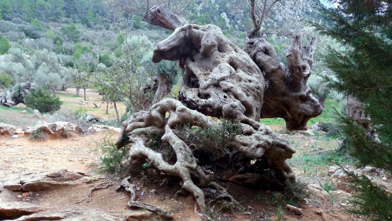 Das Kamel, El Camell excursion olivos