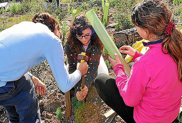 Empieza la reforestación de una zona de Peguera afectada por un incendio en 2011