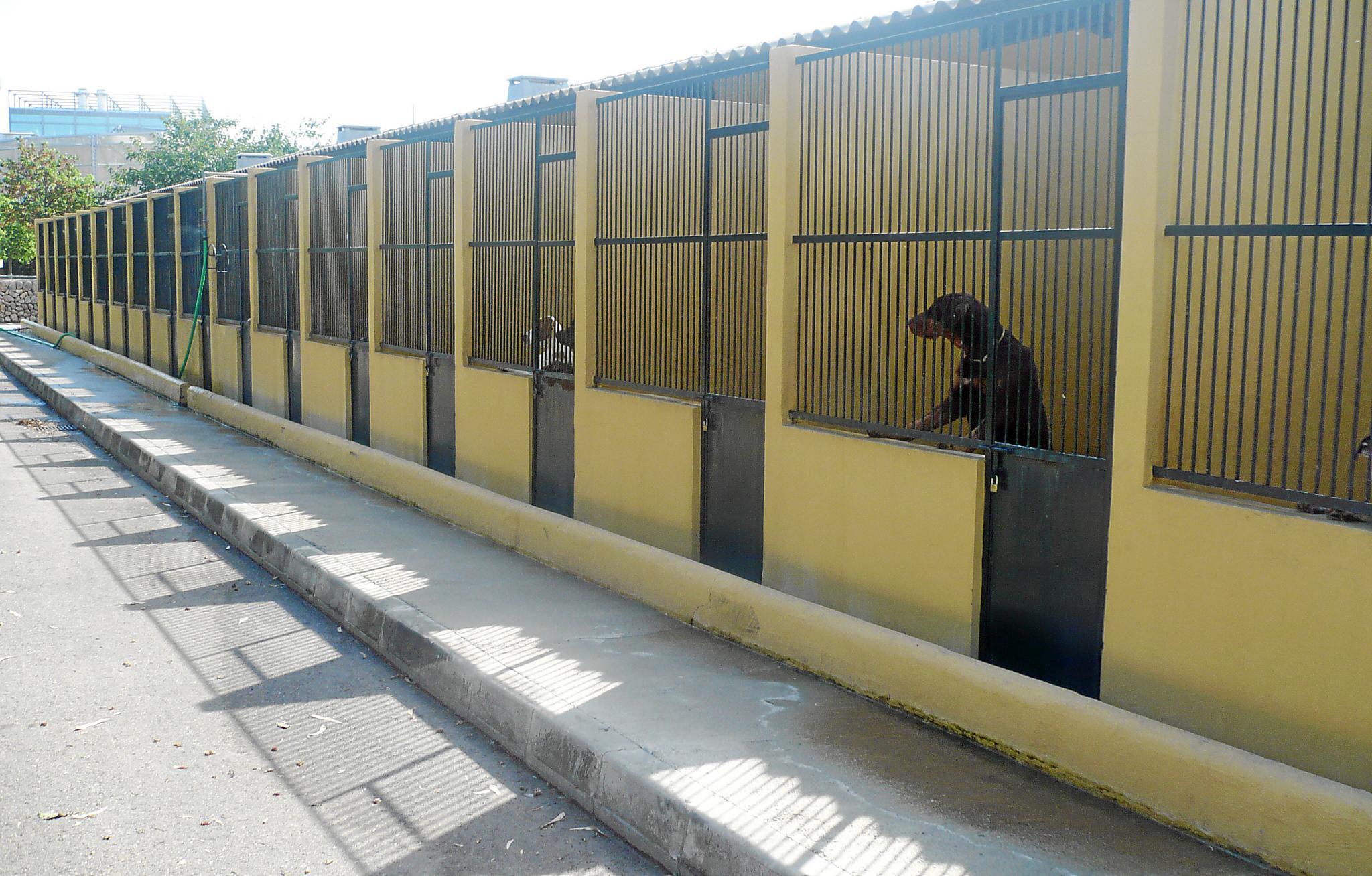 Son Reus acoge en lo que llevamos de año más de 3.700 animales abandonados