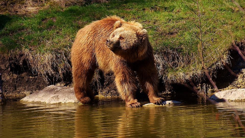 Bullyland 69397 oso pardo 11 cm de animales salvajes