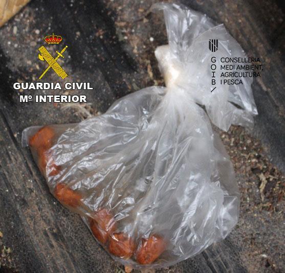 El Seprona investiga a un padre y a su hijo por envenenar aves rapaces