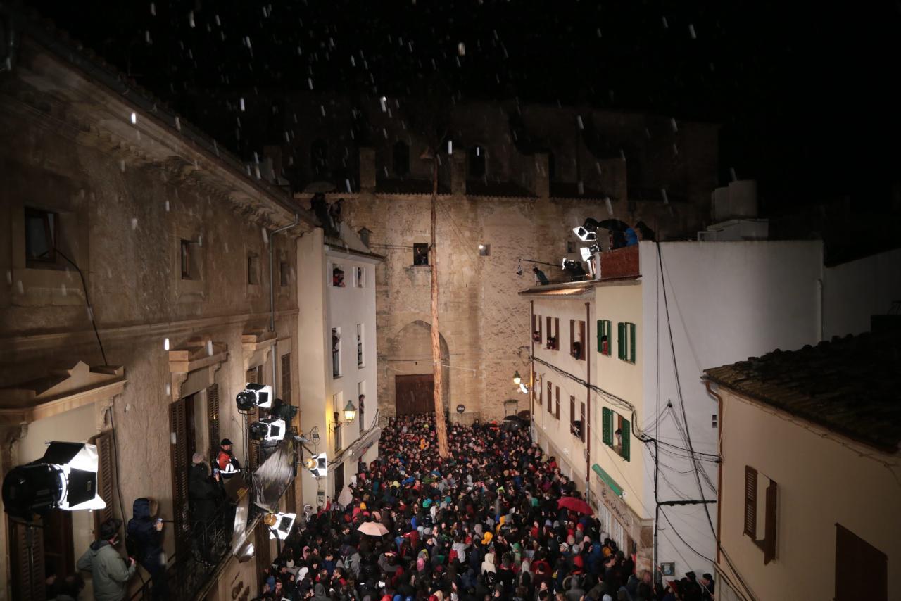 Pi de Sant Antoni