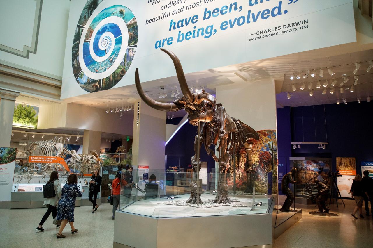 Museo de Washington mostrará un esqueleto auténtico de un