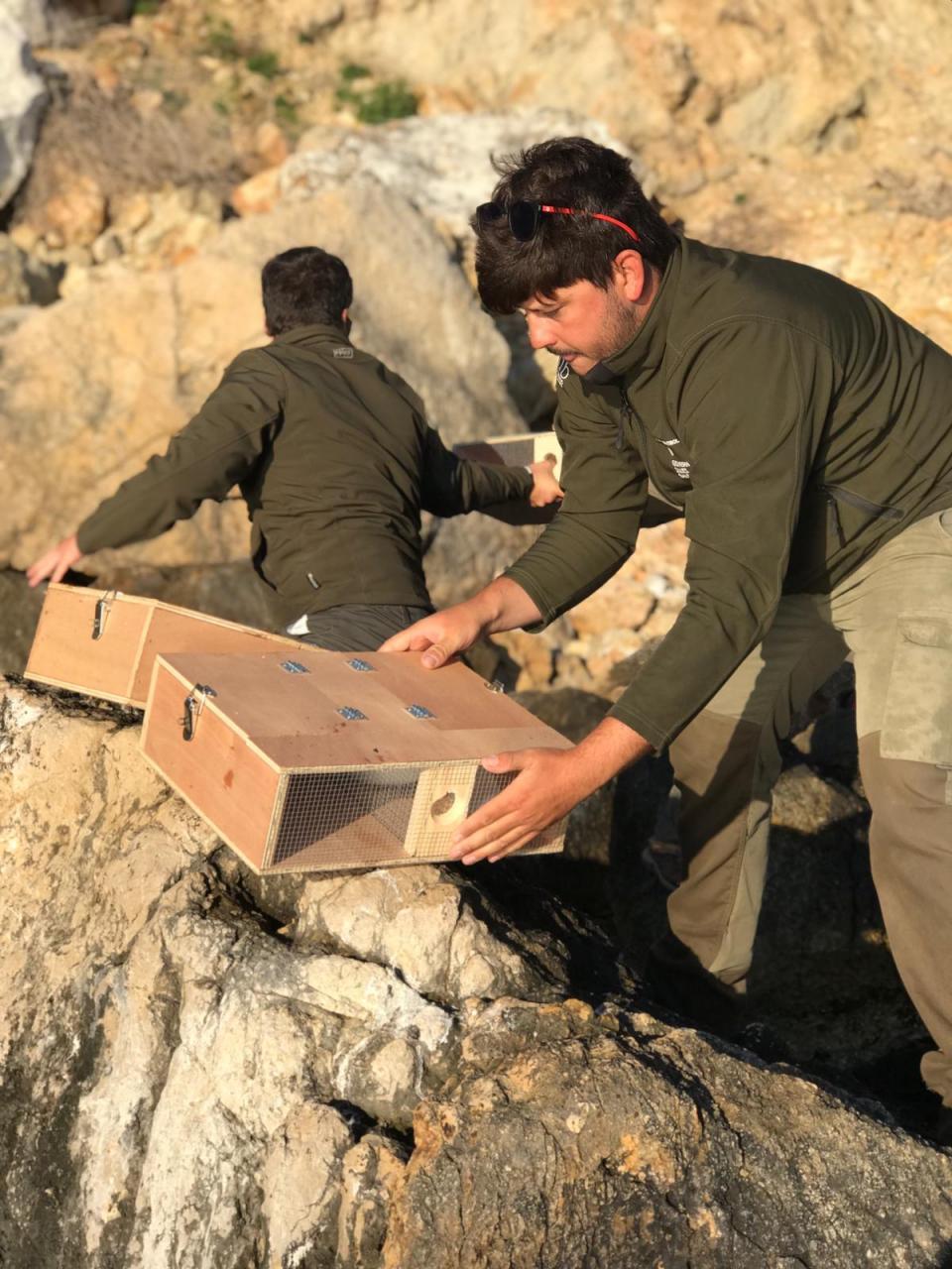 Capturados más de 700 ejemplares de serpientes en las Pitiusas en cuatro meses