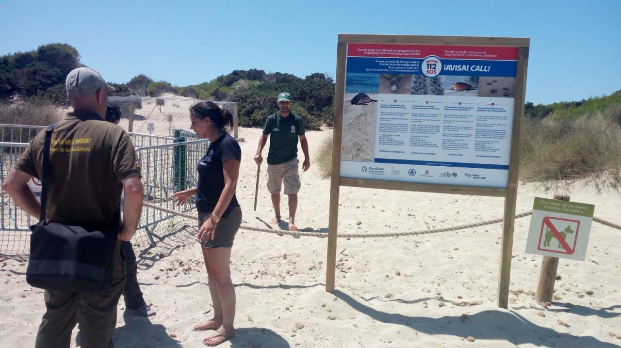 La isla de Ibiza registra el segundo desove de una tortuga marina