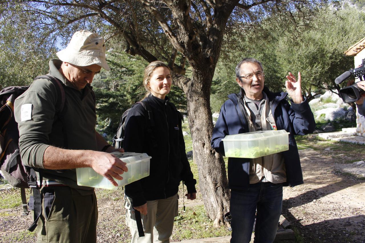 ALARÓ. Lliberats 47 ferrerets i 41 larves criats al zoo de Barcelona. Fotos: Lola Olmo