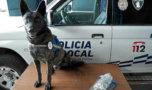 Han detectado que dos perros sufren leishmaniosis.
