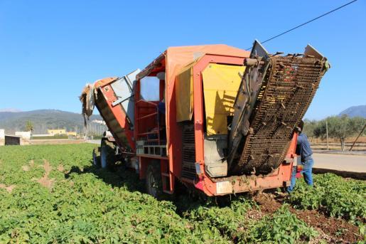 La mayor diferencia de precio se produjo en las patatas, que costaron en las tiendas 7,35 veces más que el precio pagado a los agricultores en el campo.