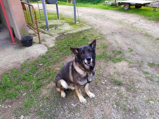 Uno de los agentes caninos en su nuevo hogar.