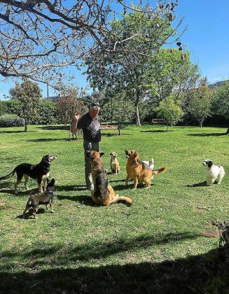 Toni cuida con esmero a sus perros, que viven encerrados en una finca rústica.