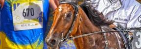 Desafío en el Hipódromo de Manacor: Un atleta correrá contra un caballo