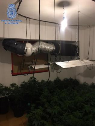 Imagen de la plantación de marihuana encontrada en una vivienda Son Gotleu.