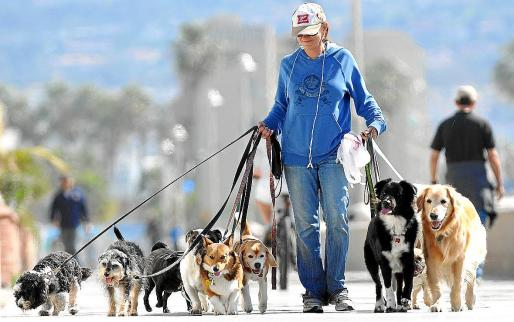 La nueva ordenanza no se fijará en el número de animales que se tenga, sino en su cuidado.