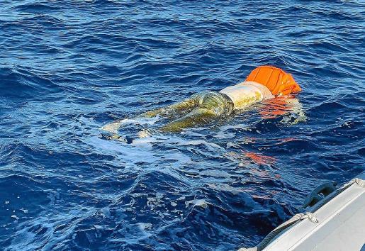 El cuerpo sin vida y con un chaleco salvavidas hallado este sábado en aguas de Palma.