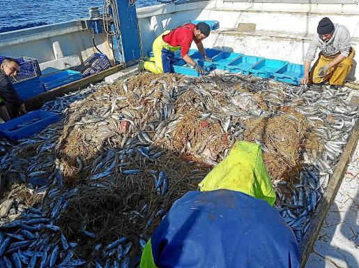 La barca 'Montgo', al sacar las capturas llenas de paja.