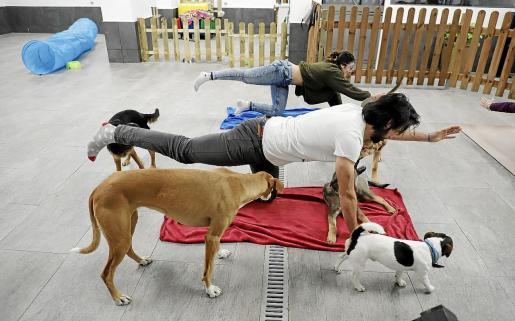 Durante hora y media se ejercitará la postura y se realizarán técnicas de respiración y meditación junto a los canes.