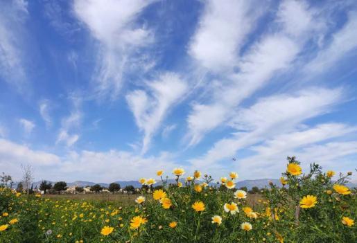 Estampa típica de un día de primavera en Mallorca.