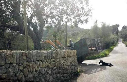 El conductor del remolque arrastra al perro en Montuïri.