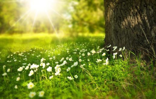 La primavera comienza este viernes.