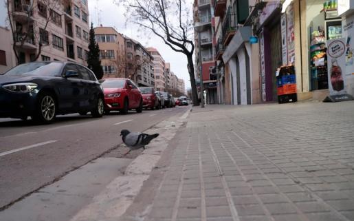 Imagen de una calle de la barriada palmesana de Santa Catalina.