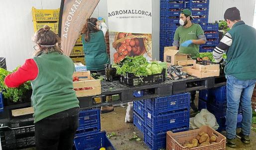 El personal de Agromallorca y de las cooperativas de Sóller y de Camp Mallorquí trabaja a destajo para gestionar los miles de encargos.