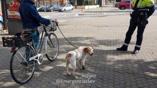 El animal llevaba una prótesis por lesión en una pata, por lo que la mujer ha sido denunciada también por incumplir la ordenanza de tenencia de animales domésticos.