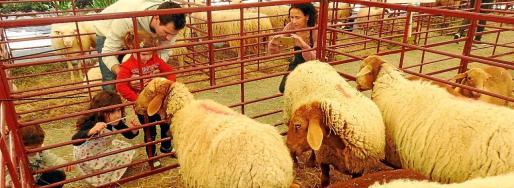 Una familia disfruta de la muestra de ganado ovino enmarcada en la Fira d'Ovi i Caprí del año pasado.