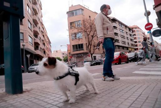 Un hombre con mascarilla paseando un perro (o al revés) por Palma.