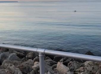 Vídeo de delfines que se aproximan a la arena en Can Pere Antoni, en Palma.