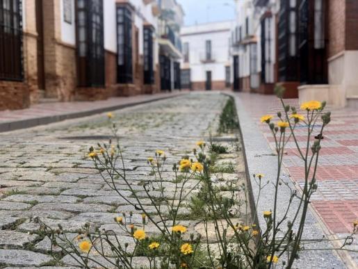 Imagen de una calle, vacía, durante el confinamiento por el avance del coronavirus.