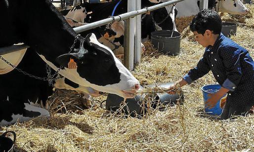 El mermado sector ganadero se quedará sin el concurso de Campos.