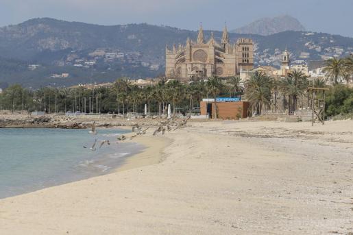 Desoladora imagen de la playa de Can Pere Antoni.