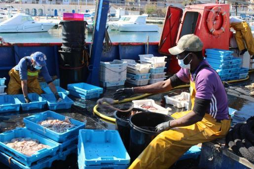 Este viernes, una de las barcas de bou que salió a trabajar preparando las capturas para salir a la venta.