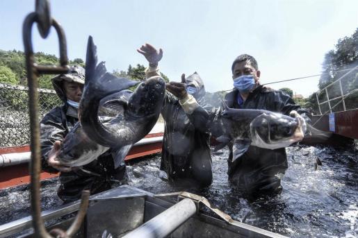 Trabajadores, en China, haciendo uso de su mascarilla.