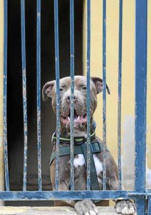 El abandono de PPP, perros potencialmente peligrosos, es una constante.
