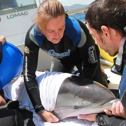 Debora Morrison trabaja desde hace más de dos décadas en la recuperación de especies marinas, como se aprecia en esta imagen de archivo.