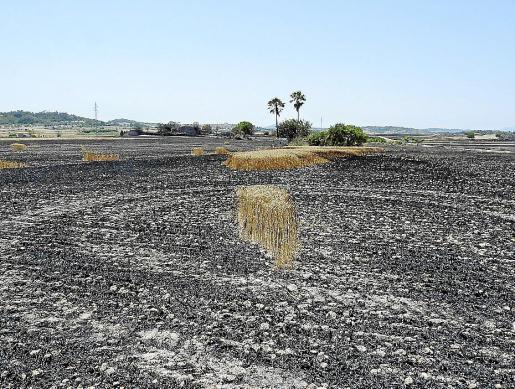 Imagen de uno de los campos de cultivo captada hace ahora un año, tras el incendio.