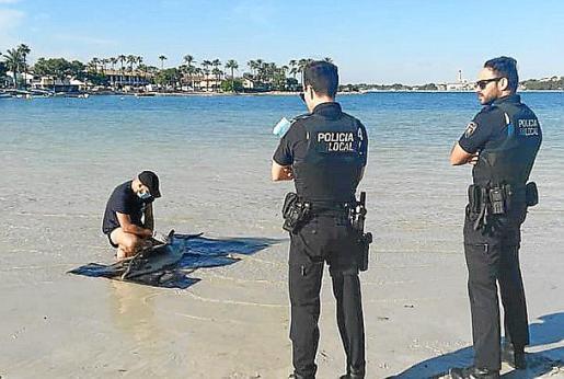 Dos agentes supervisan el sacrificio de la cría de delfín.