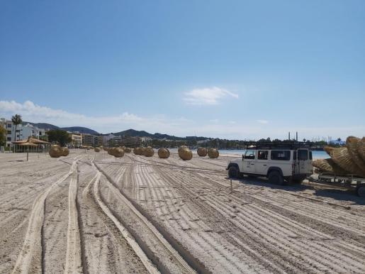 Los trabajadores municipales de Alcúdia ya han comenzado a colocar las sombrillas en la zona del Xara, las hamacas esperarán.