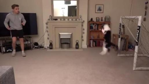 Este es el gato 'parapenaltis' que ha conquistado las redes