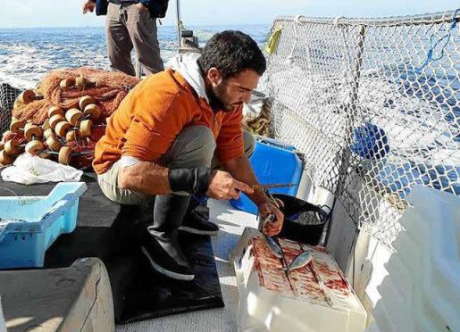 Gregori Mayol apuesta por que haya un plan de gestión junto a los pescadores de Sóller, Andratx y Pollença.